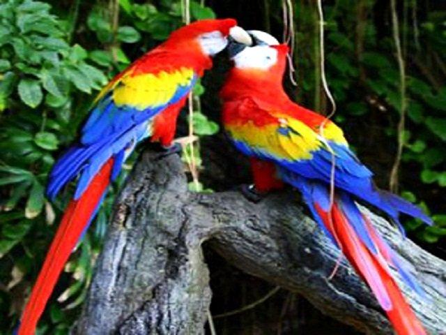 Carara National Park Birding